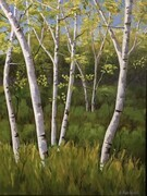 """Majestic Birches"""