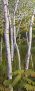 """ Sunlit River Birches"""